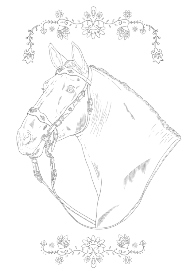 PRE stallion drawing